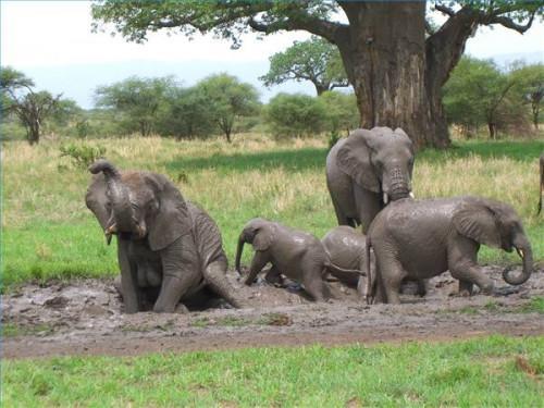 Sobre el cerebro de un elefante