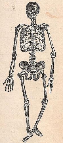 Estructura del esqueleto humano