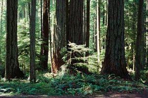 Los efectos del calentamiento global sobre la biodiversidad