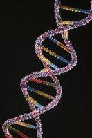Ventajas y desventajas de la tecnología del ADN recombinante