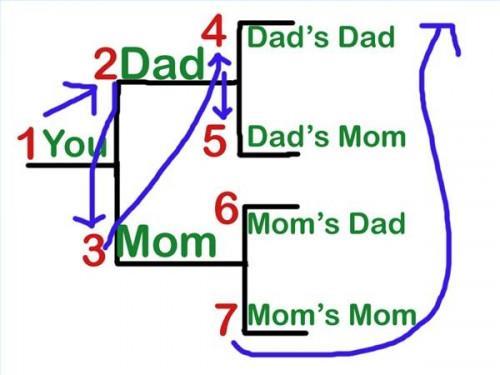 Cómo numerar un árbol genealógico