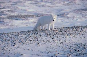 Los factores abióticos de la tundra de Alaska