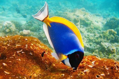 ¿Por qué los peces de agua salada tiene gusanos?