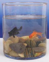 Los factores abióticos en un tanque de peces
