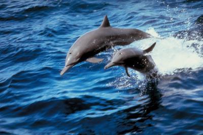 Los alimentos que come un delfín