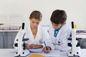 ¿Cuál es la diferencia entre los resultados y conclusiones en un experimento científico?