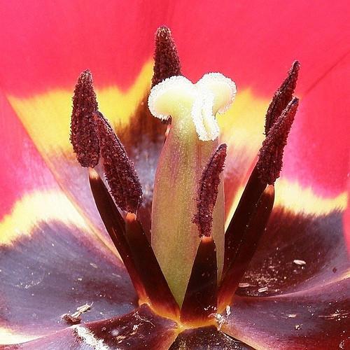 Las partes de la flor y la polinización