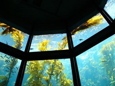 Las adaptaciones de las plantas del océano