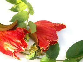 Ramos de flores tropicales de la boda