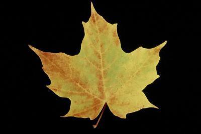 Las formas de las hojas