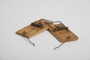 Cómo hacer una trampa para ratones con hélices