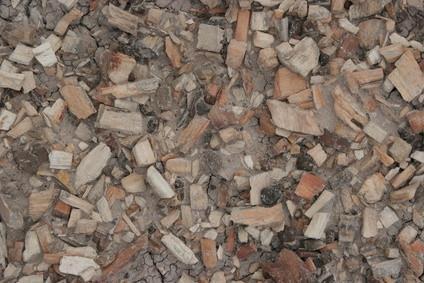 Tipos de fósiles de Texas