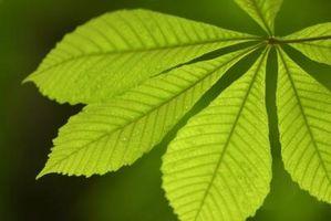La importancia de la fotosíntesis en los procesos vitales