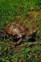 ¿Qué come una tortuga?