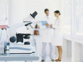 Los signos de reacciones químicas a partir de experimentos de laboratorio