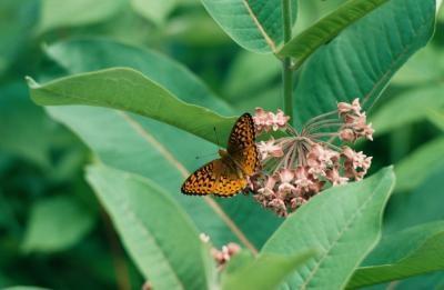 Una descripción de las partes de las alas de la mariposa
