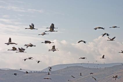 Lo aves viven en las llanuras costeras de Texas?