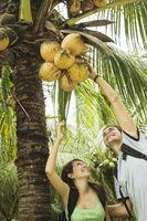 Fecha y Palm plantas en los desiertos