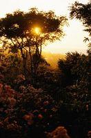 ¿Cuál es la importancia de una selva tropical?