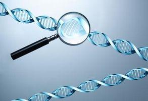 Cómo identificar una persona a través de las huellas genéticas