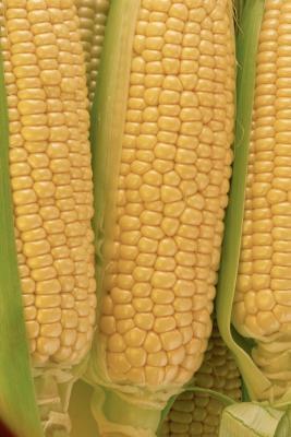 Cómo construir una cuna Modelo de maíz