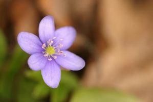 Las moléculas en Flores