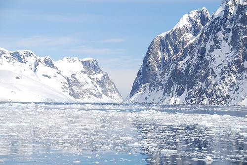 ¿Por qué es tan importante Krill para el ecosistema de la Antártida?