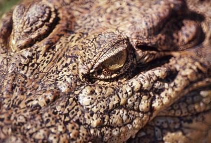 Los cocodrilos de agua salada Hábitat