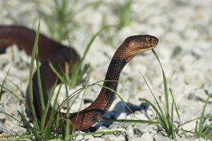 Los reptiles que dan a luz en Vivo
