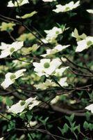Efectos de cornejos en flor sobre un ecosistema