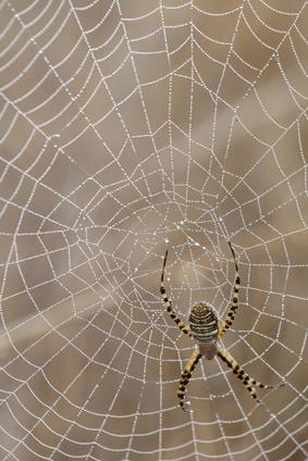 Las arañas del Norte Louisiana comunes
