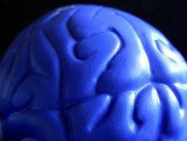 ¿Cómo afecta el Desarrollo del Lenguaje El desarrollo cognitivo?
