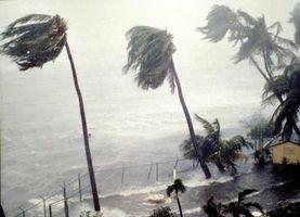 Los efectos del ecosistema en el huracán Hugo