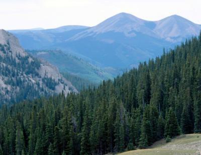 Cómo identificar un ecosistema en el área donde vive