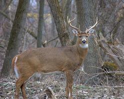 Cómo solucionar el Deer Hunter 5 juego de la PC