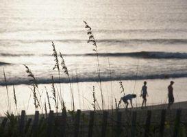 Las plantas de Carolina del Norte oceánicas costeras