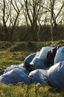 Los problemas ambientales comunes en el mundo