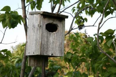 ¿Qué tipos de Birdhouse Do Bluebirds Uso?