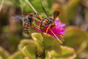 Por qué se llama a los pájaros y las abejas?