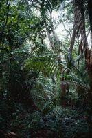 Los árboles asiático Selva