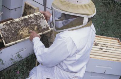 Cómo recoger la miel de una caja de abeja