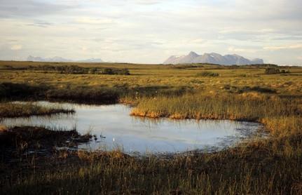 ¿Qué se hace para preservar los pantanos?