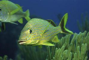 5 Características que todos los peces tienen en común
