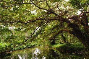En los ecosistemas de pantanos