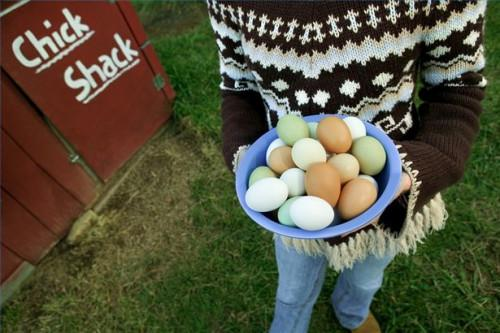 Cómo tener un huevo Toss