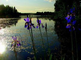 El significado del nombre de Iris