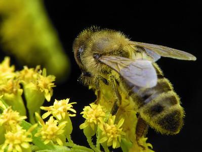 Las partes de una abeja para el tercer grado