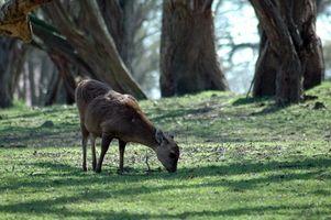 Deer Hunter 2005 Extremidades de la caza