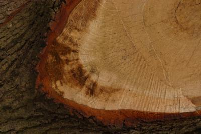 Cómo identificar los tipos de cortes de madera