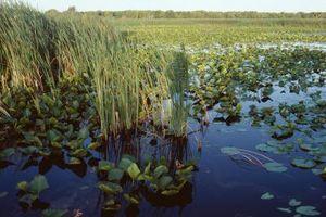 Los factores abióticos en los humedales naturales